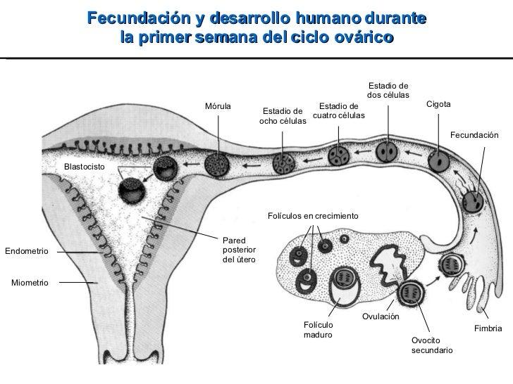 2008 Embrio Slide 2
