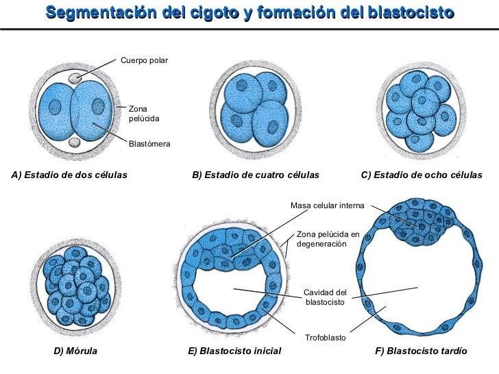 2008 Embrio