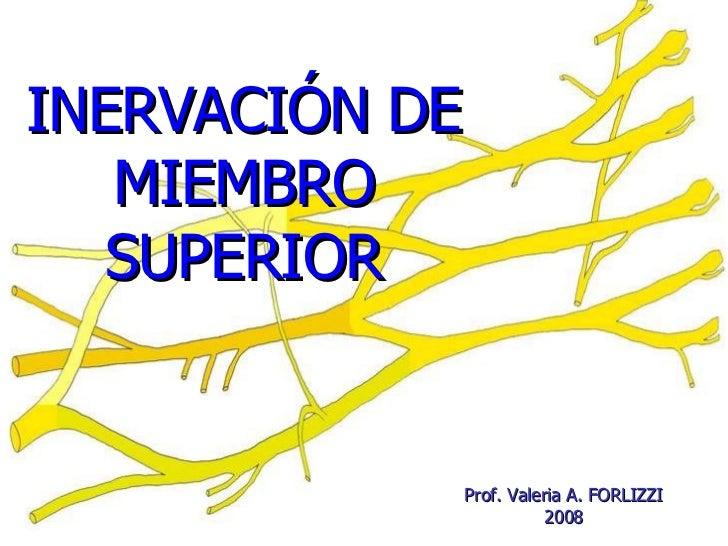 INERVACIÓN DE MIEMBRO SUPERIOR Prof. Valeria A. FORLIZZI 200 8