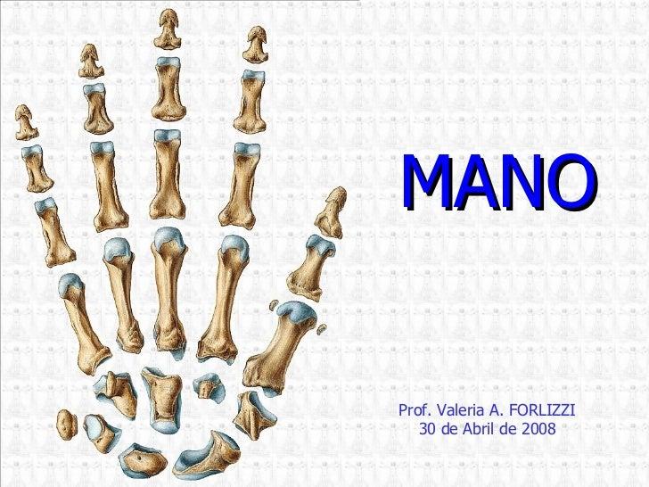 Prof. Valeria A. FORLIZZI 30 de Abril de 2008 MANO