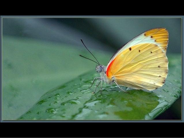 Beauté des papillons