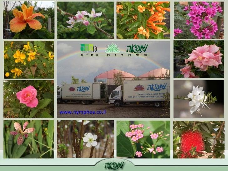 www.nymphea.co.il