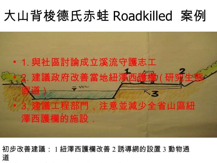 大山背梭德氏赤蛙 Roadkilled  案例   <ul><li>1. 與社區討論成立溪流守護志工 </li></ul><ul><li>2. 建議政府改善當地紐澤西護欄 ( 研究生態廊道 ) </li></ul><ul><li>3. 建議工程...