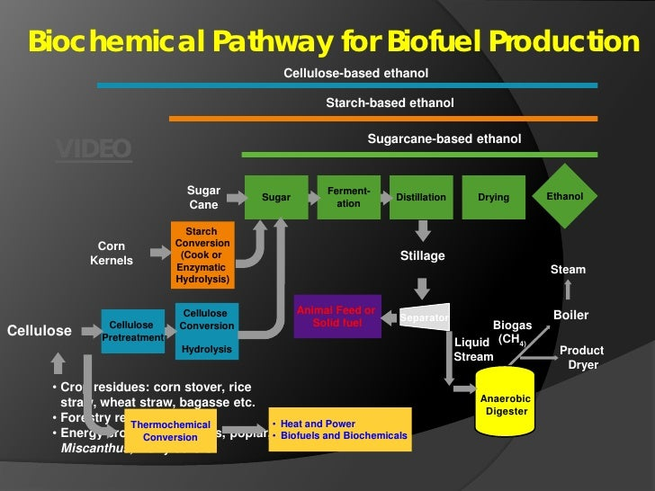 Biomass Conversion To Biofuel And Biobased Product