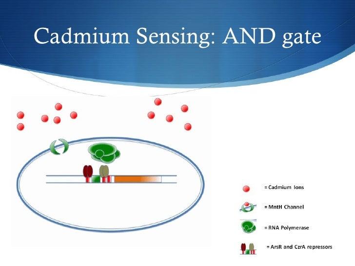 Cadmium Sensing: AND gate