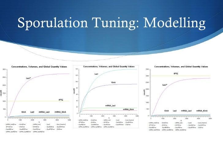 Sporulation Tuning: Modelling