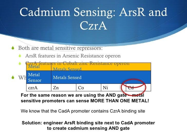 Cadmium Sensing: ArsR and CzrA <ul><li>Both are metal sensitive repressors: </li></ul><ul><ul><li>ArsR features in Arsenic...