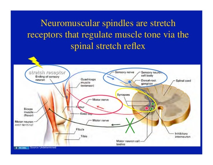 purves et al neuroscience 5th edition pdf