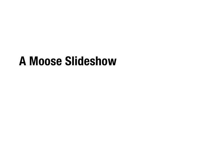 A Moose Slideshow