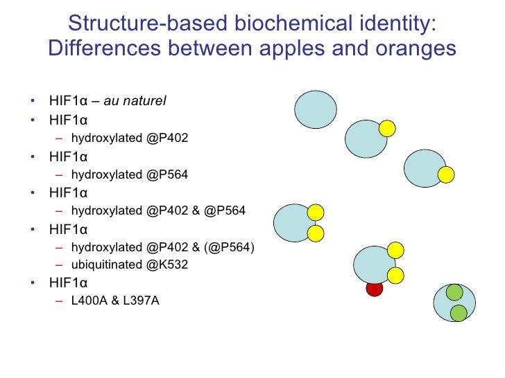 Structure-based biochemical identity: Differences between apples and oranges <ul><li>HIF1 α  –  au naturel </li></ul><ul><...