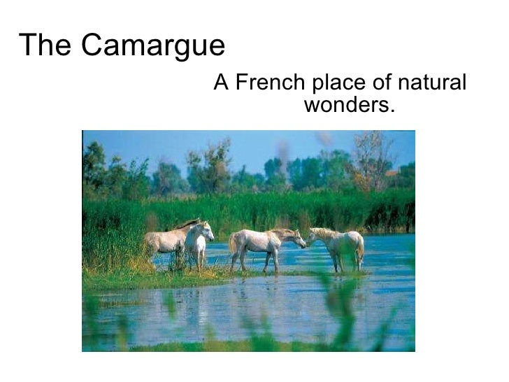 The Camargue A French place of natural wonders.