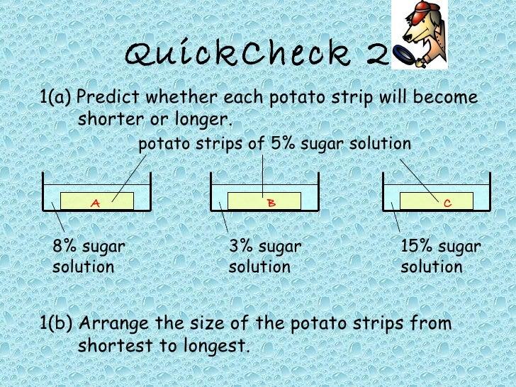 potato strip experiment