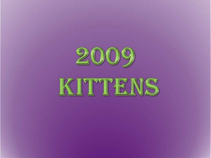 2009 Kittens<br />