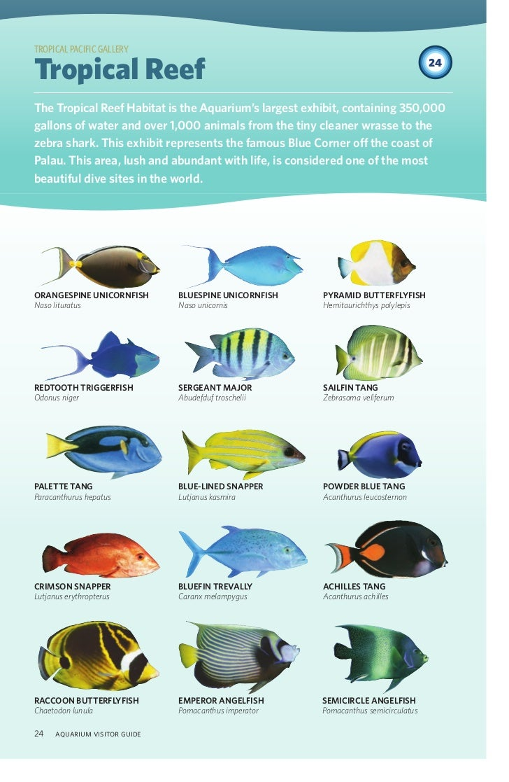 Fish aquarium guide -  Aquarium Visitor Guide 23 24
