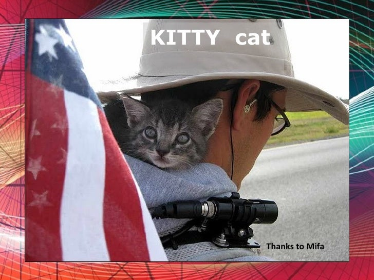 Free Powerpoint Templates KITTY  cat  Thanks to Mifa