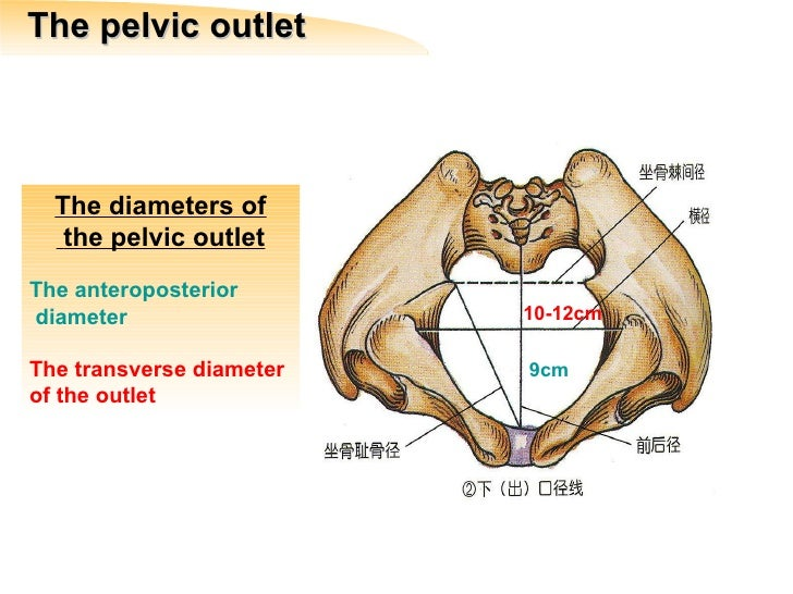 Pelvic Inlet And Outle...