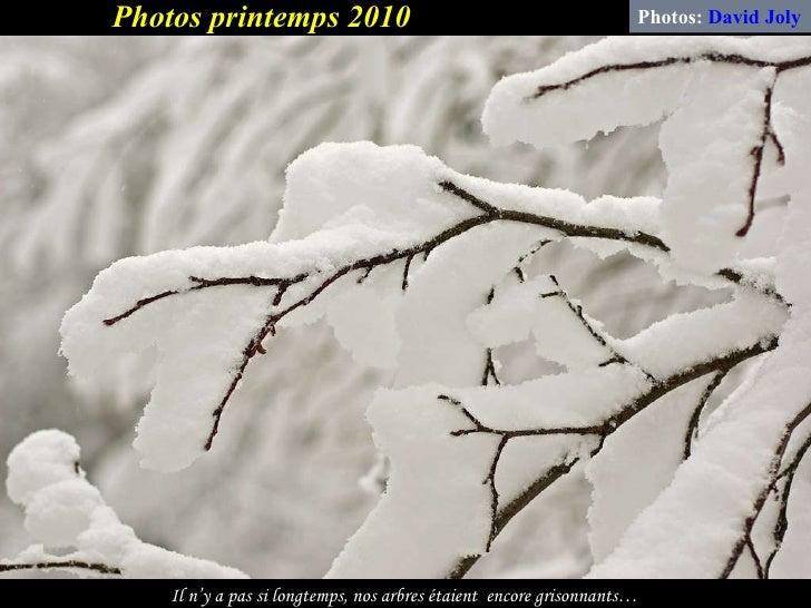 Il n'y a pas si longtemps, nos arbres étaient  encore grisonnants… Photos:  David Joly Photos printemps 2010