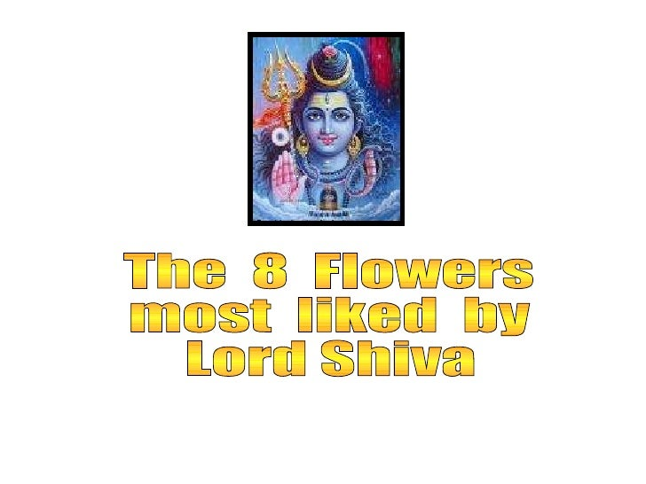 The  8  Flowers most  liked  by Lord Shiva