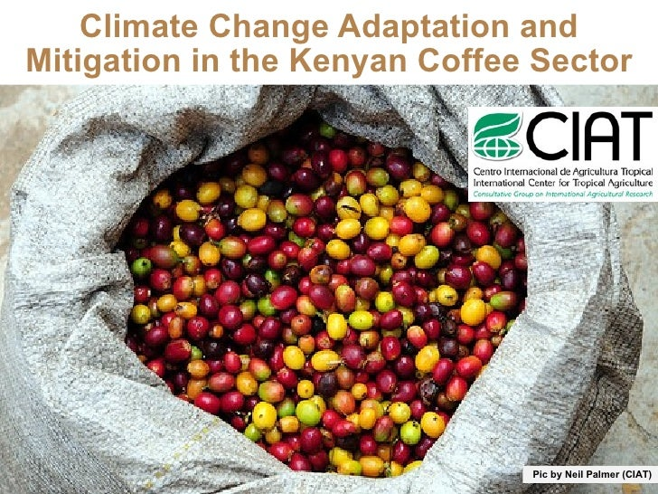 Climate Change Adaptation and Mitigation in the Kenyan Coffee Sector