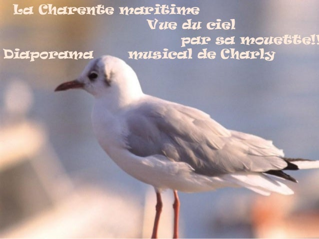La Charente maritime Vue du ciel par sa mouette!! Diaporama musical de Charly