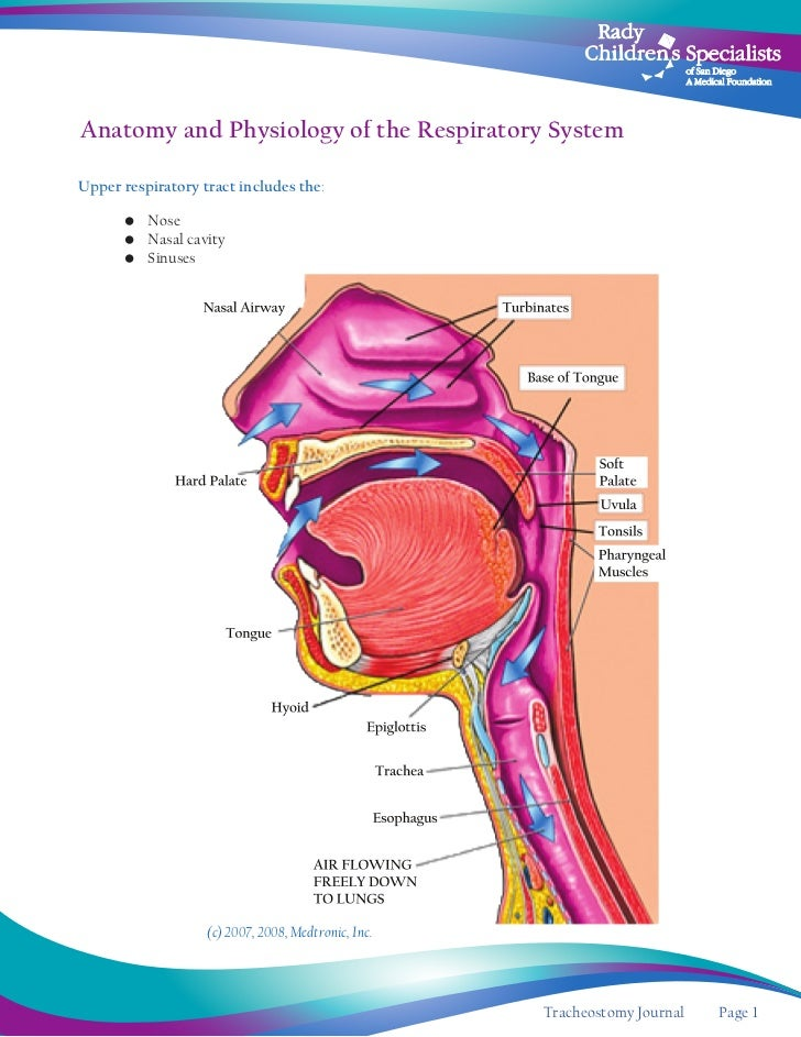 Funky How Hard Is Anatomy And Physiology Illustration - Anatomy And ...