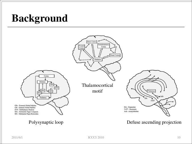 On the Development of a Brain Simulator