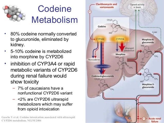 Dumontier::BIOL4301:Personalized Medicine Codeine Metabolism Gasche Y et al. Codeine intoxication associated with ultrarap...