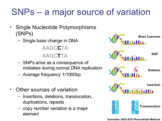 Dumontier::BIOL4301:Personalized Medicine SNPs – a major source of variation • Single Nucleotide Polymorphisms (SNPs) – Si...