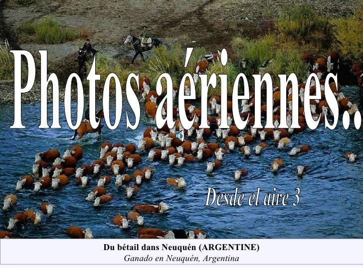Desde el aire 3 Photos aériennes... Du bétail dans Neuquén (ARGENTINE) Ganado en Neuquén, Argentina