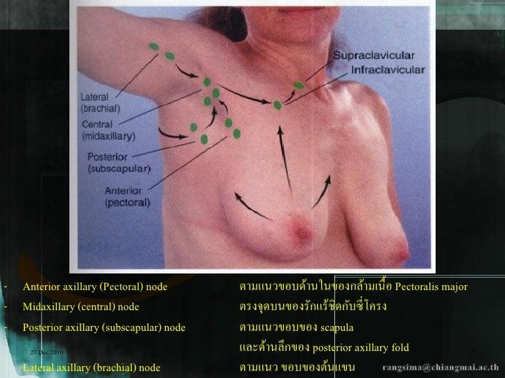 - Anterior axillary (Pectoral) node       ตามแนวขอบด้านในของกล้ามเนื้อ Pectoralis major- Midaxillary (central) node       ...
