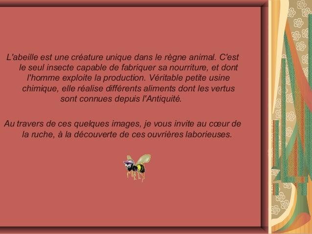Dans la ruche Slide 3
