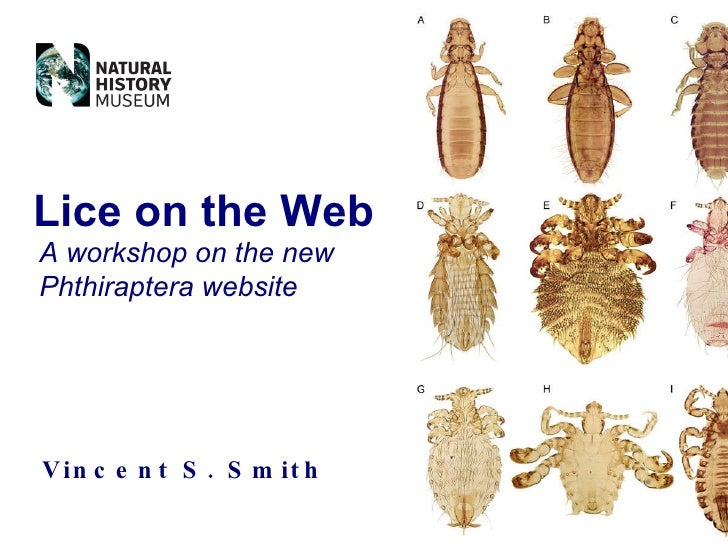Vincent S. Smith Lice on the Web A workshop on the new Phthiraptera website