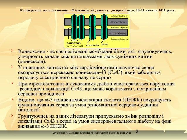 Вплив ω-3  поліненасичених жирних кислот  на структурні зміни коннексину-43  при стрептозотоцин-індукованому цукровому діабеті. Slide 2