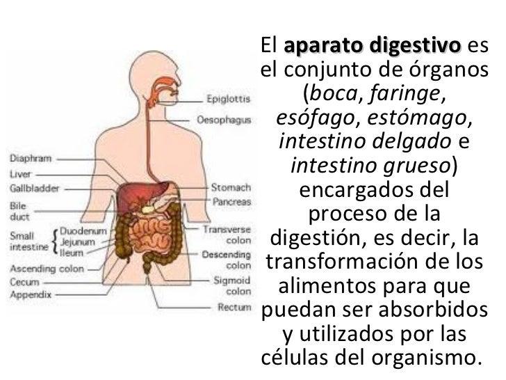 2011-7a-nutrientes