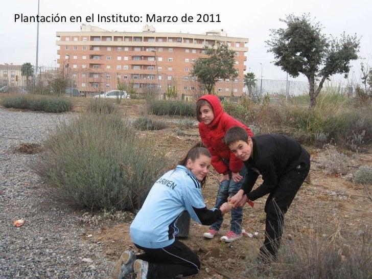Plantación en el Instituto: Marzo de 2011