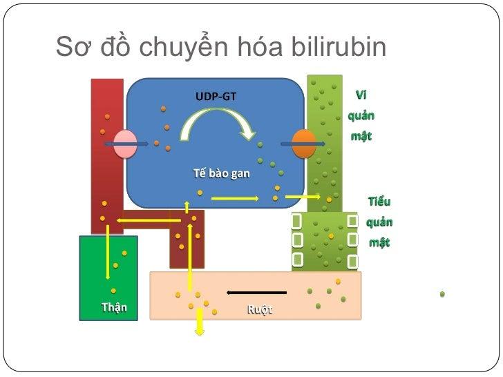 Sơ đồ chuyển hóa bilirubin<br />