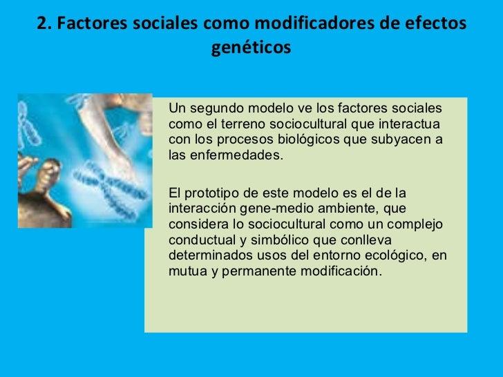 2. Factores sociales como modificadores de efectos genéticos <ul><li>Un segundo modelo ve los factores sociales como el te...