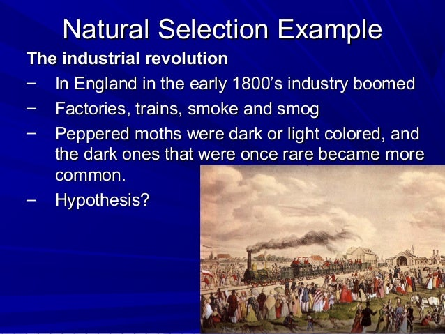 How Does Adaptation Work In Natural Selection
