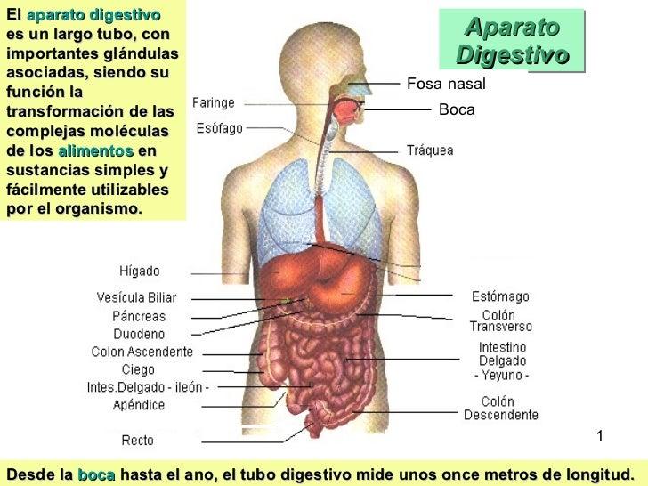 APARATO DIGESTIVO: GENERALIDADES Y VALORACION
