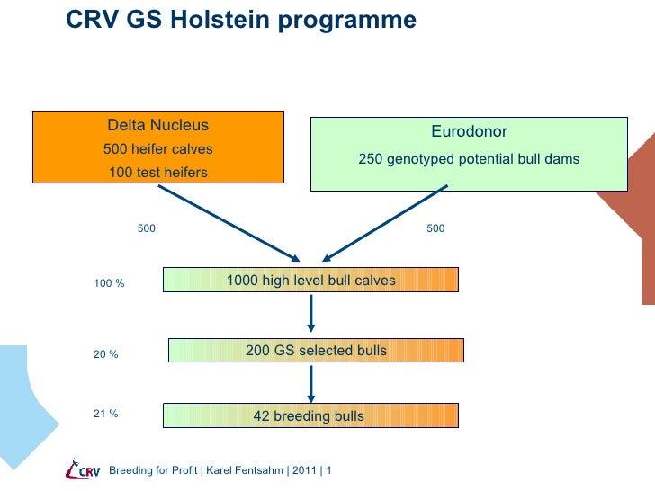 CRV GS Holstein programme Breeding for Profit   Karel Fentsahm   2011    Delta Nucleus 500 heifer calves 100 test heifers ...