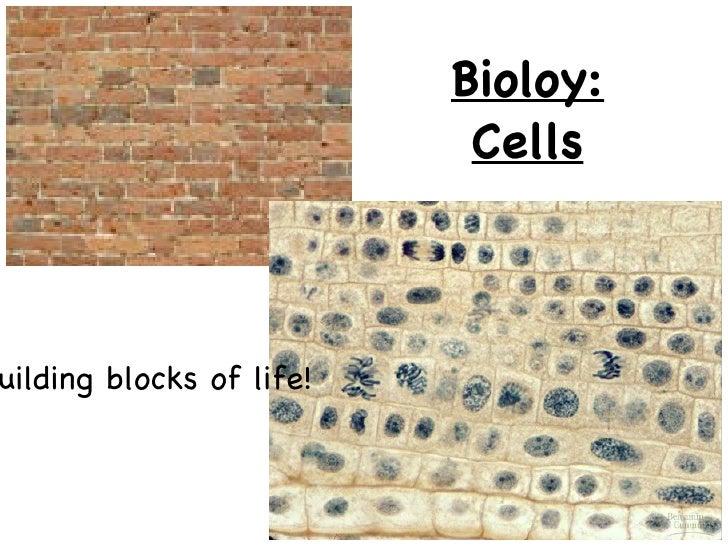 <ul>Bioloy: Cells </ul><ul>Building blocks of life! </ul>