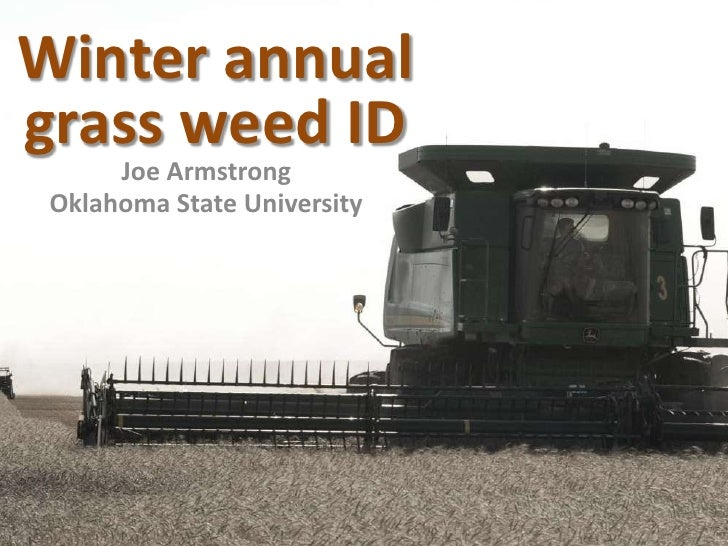 Winter annual grass weed ID<br />Joe Armstrong<br />Oklahoma State University<br />