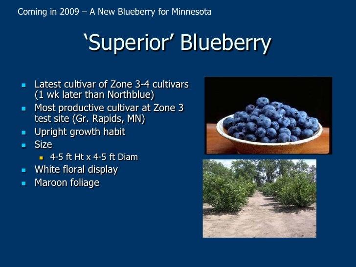 Umn 2010 Small Fruit Variety Update