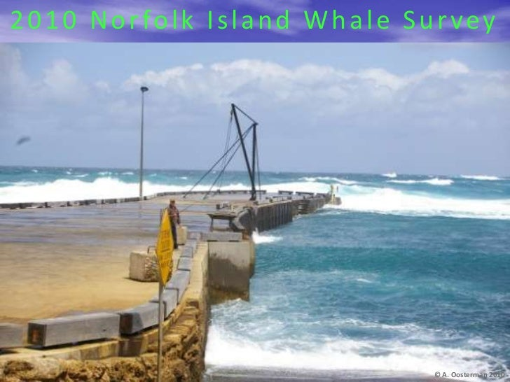 2010 Norfolk Island Whale Survey<br />© A. Oosterman 2010<br />