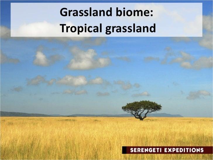essays on grasslands