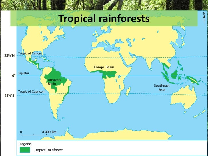distribution of natural vegetation in the world