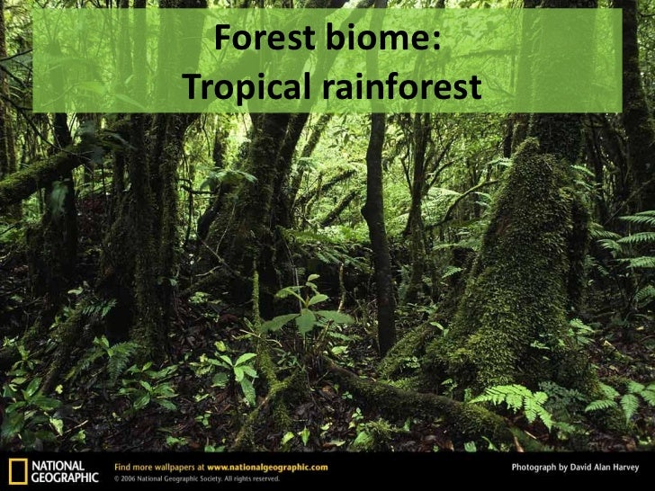 Temperate forest biome climate