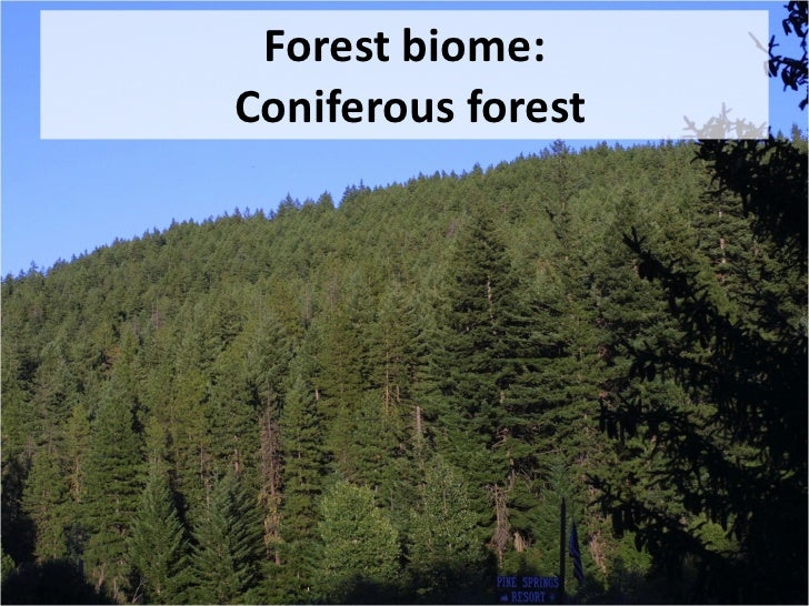 an analysis of the different types of forest Using highly sensitive isotope analysis, a research team has obtained   measure two different types (isotopes) of carbon dioxide in the air.