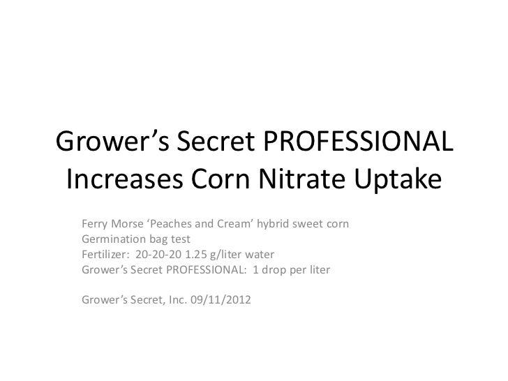 Grower's Secret PROFESSIONAL Increases Corn Nitrate Uptake Ferry Morse 'Peaches and Cream' hybrid sweet corn Germination b...