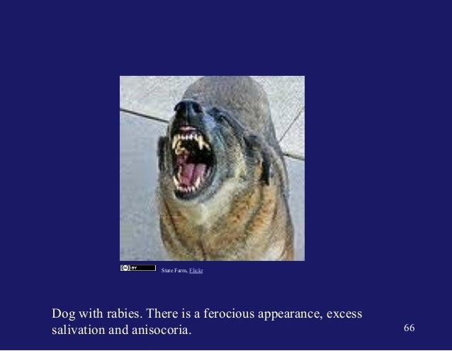 GEMC - Mammal and Human Bite Injuries